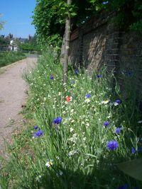 EGP wildflowers 1