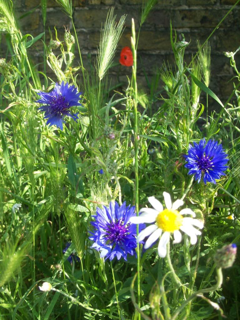 EGP wildflowers 2