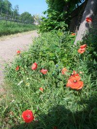 EGP wildflowers 3
